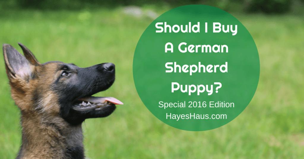 German Shepherd Puppy Pricing Guide 2016
