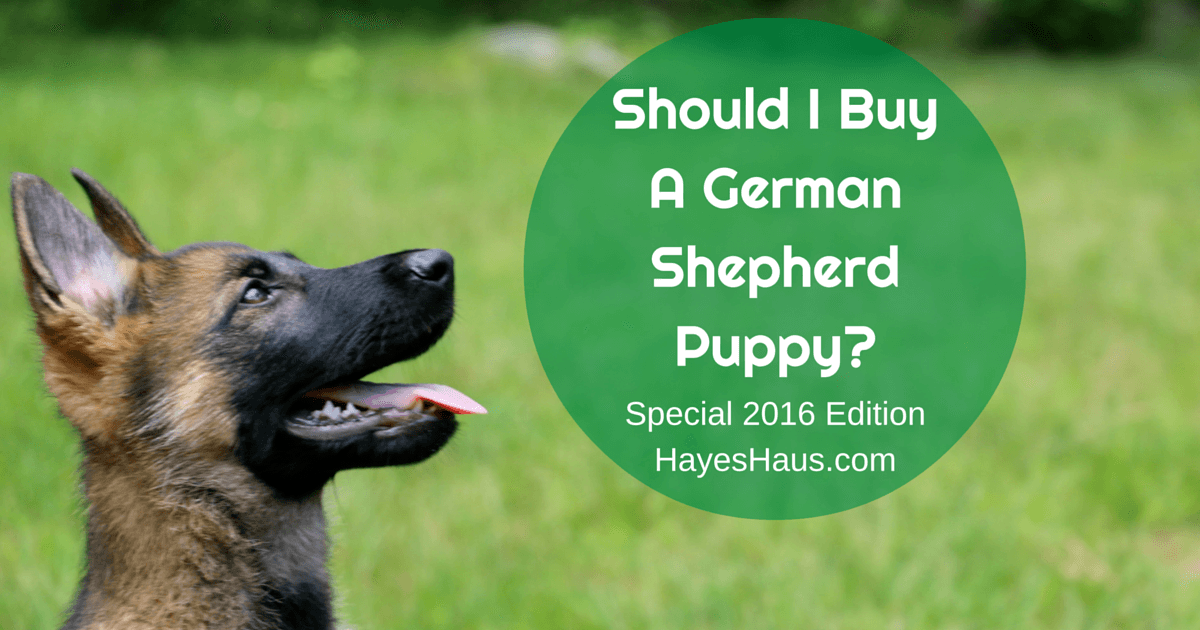 German Shepherd Ownership Costs Beyond Simple Puppy Pricing